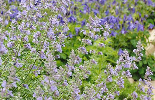 Flower and Perennial Gardens
